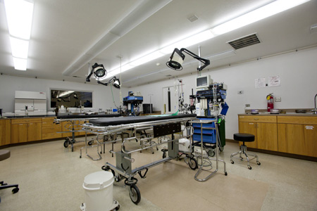 Preclinical research surgery suite